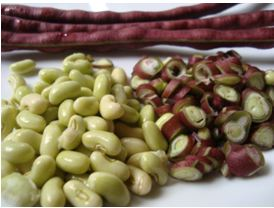 ถั่วพุ่มกินได้ทั้งฝักสดและเมล็ดแห้ง