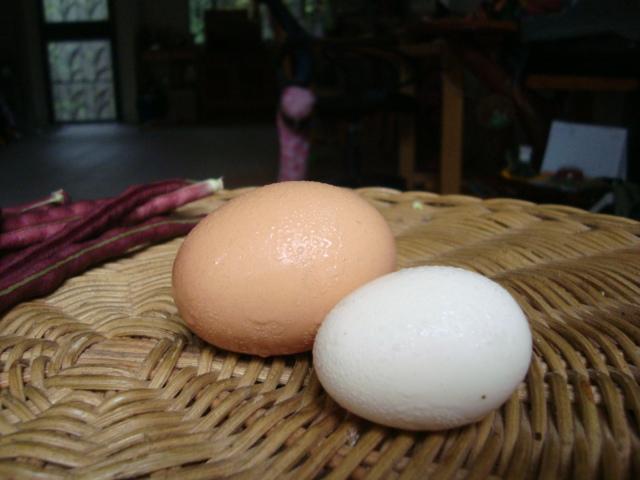 ไข่ไก่จากตลาด